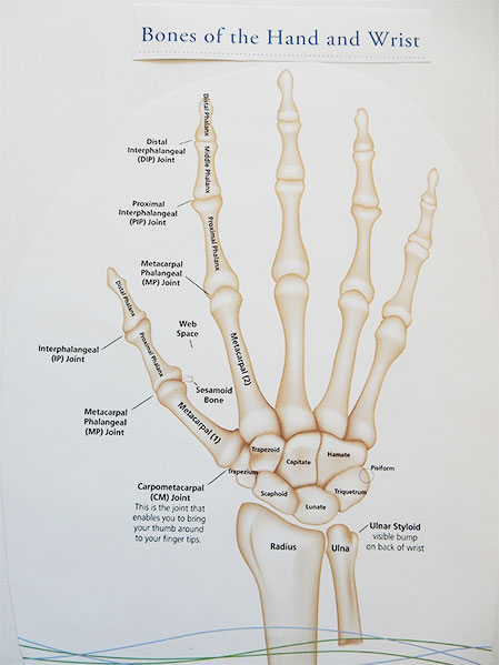 There are 27 bones in the hand and wrist